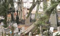 Drzewa_nie_wytrzymaly_naporu_wiatru_001.jpg